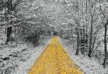 jesienno-zimowe spacery